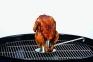 Стойка для приготовления курицы на гриле ROSLE 30см (R25078) 0